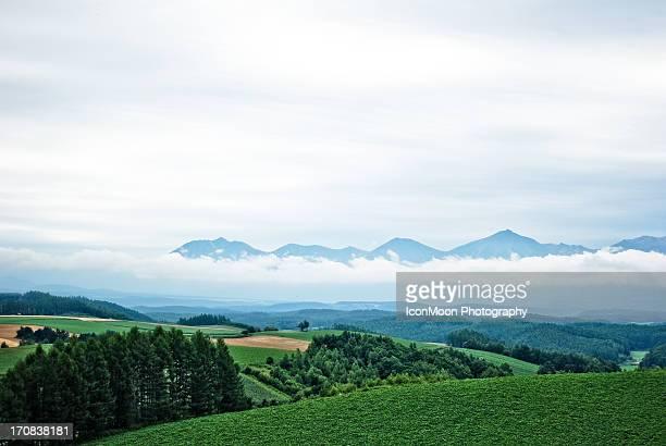 Fields in Biei