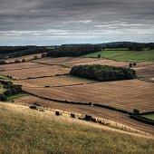 Fields in Rolling Countryside