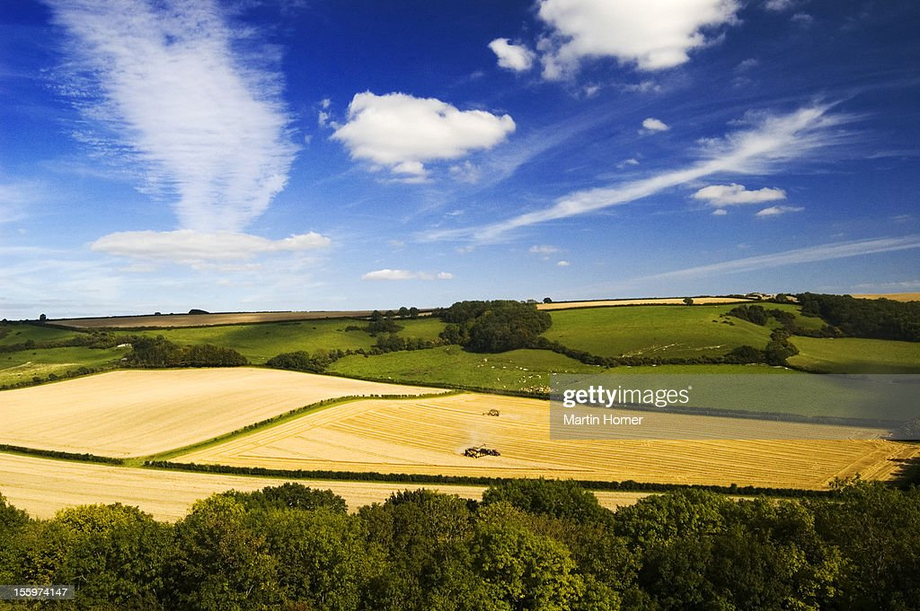 Fields of golden crops : Stock Photo