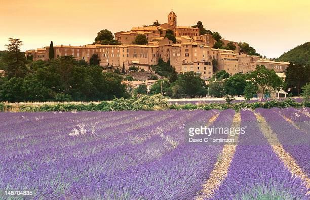 Fields of lavender in front of village buildings, Alpes-de-Haute-Provence.