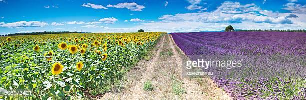Der Provence