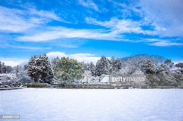 Fields of rice paddy covered with thick snow