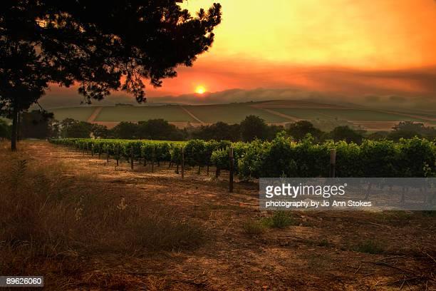 A fiery landscape