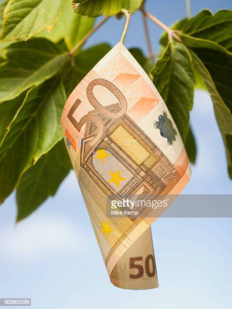 Fifty Euro banknote on tree branch with leaves