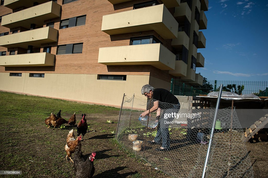 Fifty-six year old Dora feeds hens in the garden outside an occupied newly constructed building where she moved two months ago after being unable to afford to pay the rent on June 5, 2013 in Salt, Spain. In 2010 Spanish banks foreclosed on more than 100,000 households contributing to the already large number of empty houses in Spain. With as many as one million properties unsold victims of Spain's financial crisis have turned to squatting in the empty buildings. This building has stood empty for two years before the anti-eviction platform of Girona and several homeless families moved in three months ago. The community houses a total of 8 families who have to suffer water and electricity cuts and live with the fear of eviction.