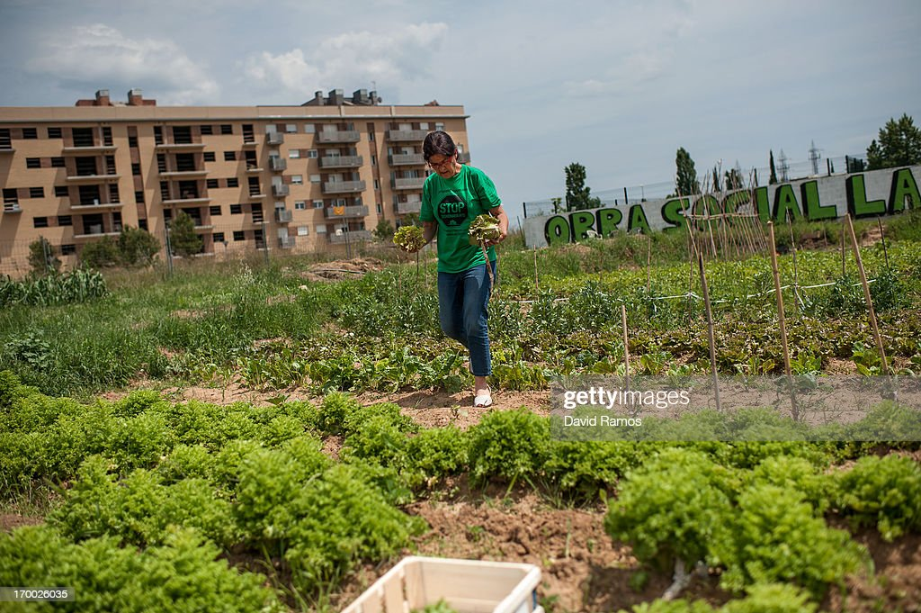 Fifty-three year old Engracia Caselles, teacher unemployed for one year, picks up vegetables in a plot next to an occupied newly constructed building where she moved with her twenty-three years old daughter two months ago due to being unable to afford to pay rent, on June 5, 2013 in Salt, Spain. In 2010 Spanish banks foreclosed on more than 100,000 households contributing to the already large number of empty houses in Spain. With as many as one million properties unsold victims of Spain's financial crisis have turned to squatting in the empty buildings. This building has stood empty for two years before the anti-eviction platform of Girona and several homeless families moved in three months ago. The community houses a total of 8 families who have to suffer water and electricity cuts and live with the fear of eviction.