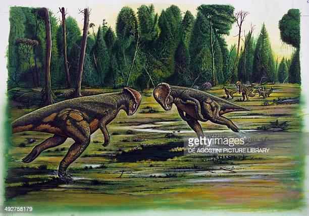 Fight between Stegoceras sp Late Jurassic Illustration
