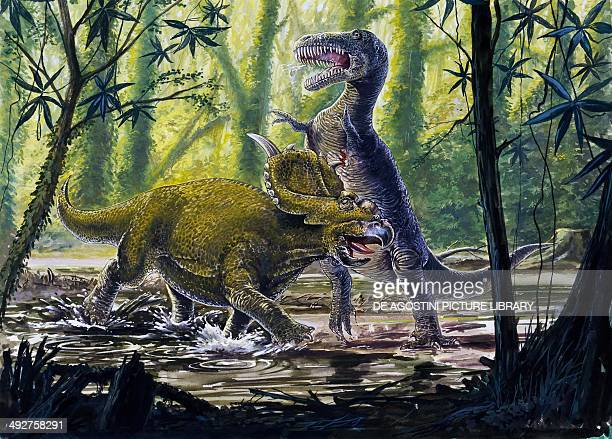 Fighting between Pachyrhinosaurus canadensis Ceratopsidae and tyrannosaurid Late Cretaceous Illustration
