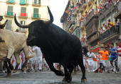 A fighting bull takes the curve during the third day of the running of the bulls of the San Fermin fiesta on July 9 2010 in Pamplona Spain Fighting...