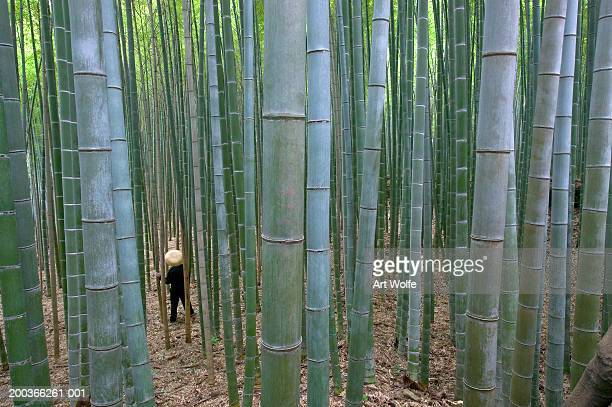 Figure walking in bamboo forest, Kyoto, Honshu, Japan