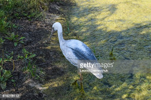 Figurine stork near a pond : Photo