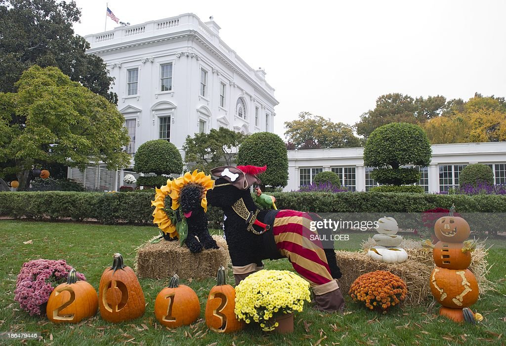 Figurines of the presidential dogs, Bo (R) and Sunny (L), dressed up for Halloween, stand near the Jacqueline Kennedy Garden prior to US President Barack Obama and First Lady Michelle Obama welcoming local children and children of military families to trick-or-treat for Halloween at the White House in Washington, DC, October 31, 2013. AFP PHOTO / Saul LOEB