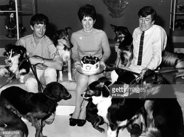 File dated 4868 of Blue Peter presenters John Noakes Valerie Singleton and Peter Purves Blue Peter presenters past and present gathered in the in the...