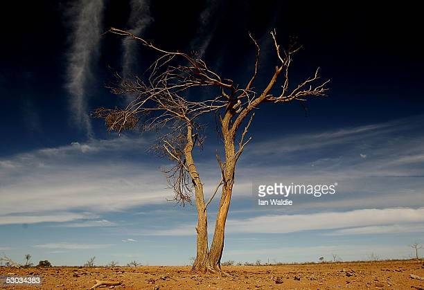 A file photo shows a dead tree at Wilpoorinna sheep and cattle station June 7 2005 in Leigh Creek Australia An Australian Federal Government report...