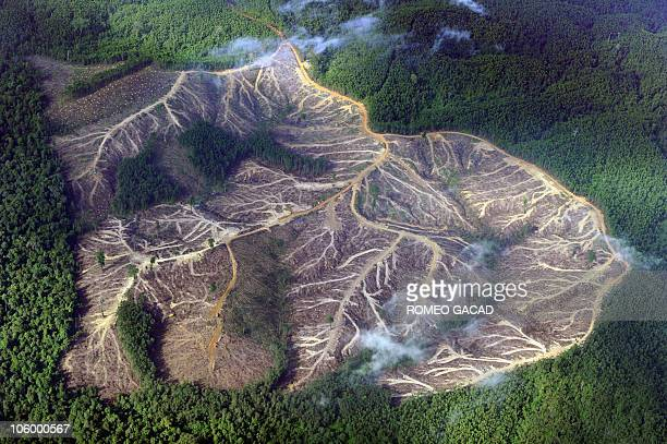 File photo taken August 5 2010 shows a logged over area in the mountains of Jambi province in Indonesia's Sumatra island A UN conference on global...