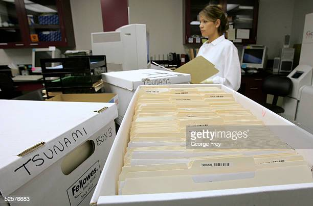 1300 files wait in boxes as Jenny Cummings a lab technician for Sorenson Genomics processes DNA samples of victims of last December's Indian Ocean...