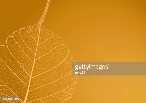 Filigree leaves with brown background : Stock Photo