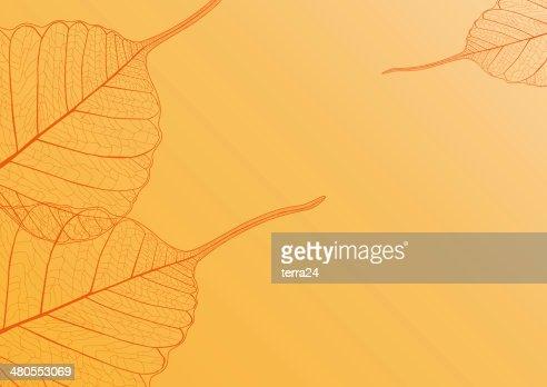 Filigrana com fundo laranja folhas : Foto de stock