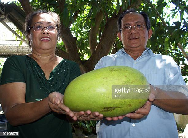 Filipino couple Sergio and Maria Socorro Bodiongan pose on August 27 2009 with their 35kilo mango grown at their backyard in Iligan City on Mindanao...