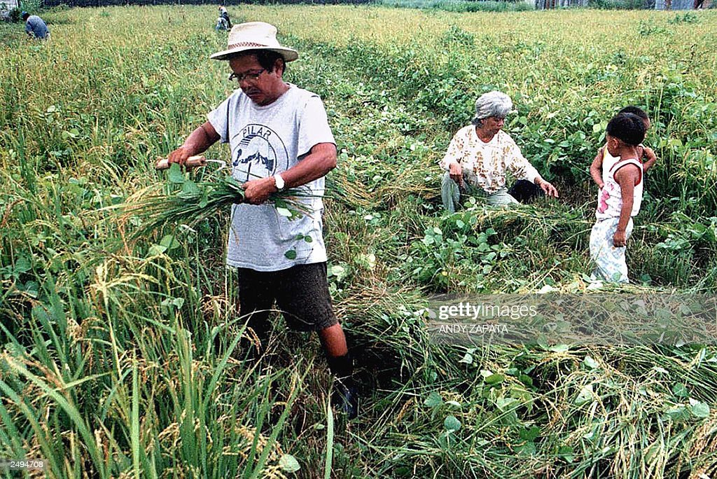 image Philippines rice farmer rents anus and little bottom