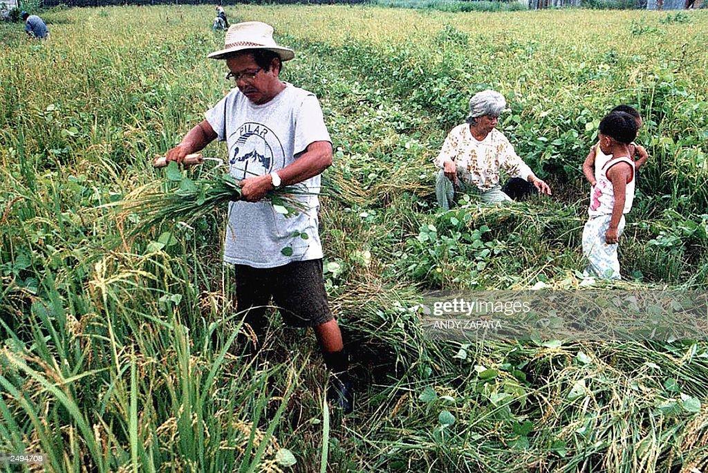 A Filipino farmer and ...