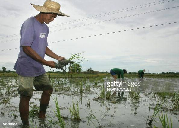 Philippines rice farmer rents anus and little bottom