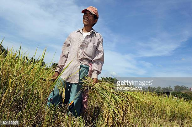 Filipino farmer Noel Abella harvests rice in Alubijid town in Misamis Oriental located in southern Philippine island of Mindanao on April 1 2008...