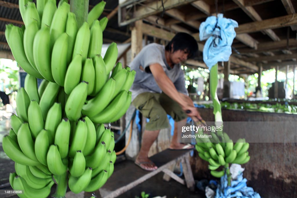 filipino an exported workers With exports faltering and stocks aging populations are prompting japan and south korea to place more job orders for filipino health workers.