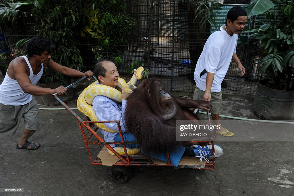 Filipino-Chinese zoo owner Manny Tiangco is pushed in a cart along with his pet orangutan, Manny Pacquiao and an albino python inside the Malabon Zoo in suburban Manila on October 3, 2013. The zoo joined the world on the eve of World Animal Day to create awareness to people to protect and conserve the environment for the survival of the animals in nature. AFP PHOTO / Jay DIRECTO