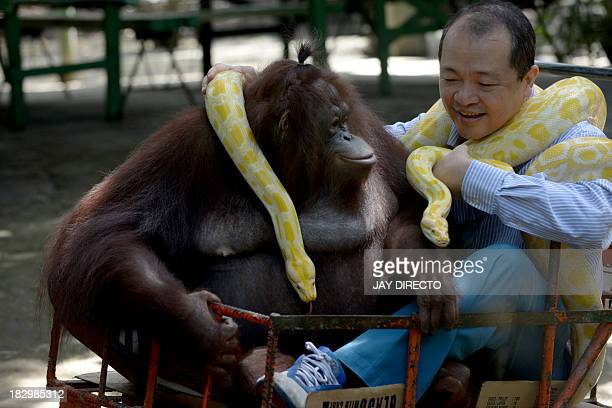 FilipinoChinese zoo owner Manny Tiangco shows his pet orangutan Manny Pacquiao and an albino python inside the Malabon Zoo in suburban Manila on...