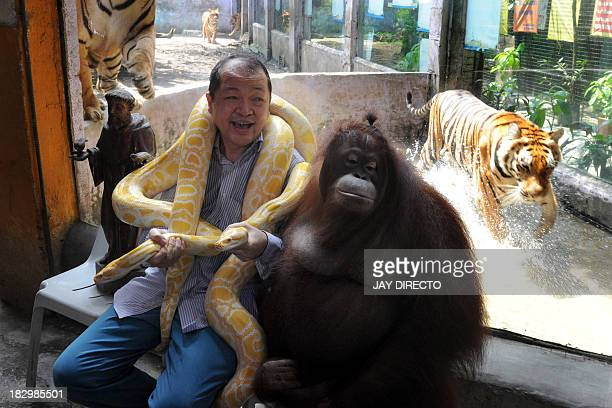 FilipinoChinese zoo owner Manny Tiangco shows his pet orangutan Manny Pacquiao and an albino python as a Bengal tiger walks behind inside the Malabon...