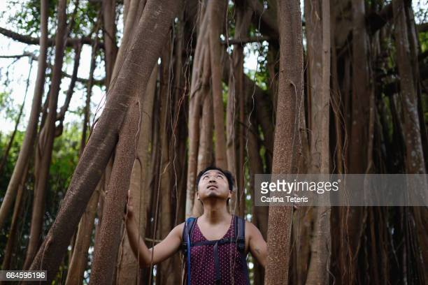 Filippino man looking up through the roots of an Indian Rubber tree