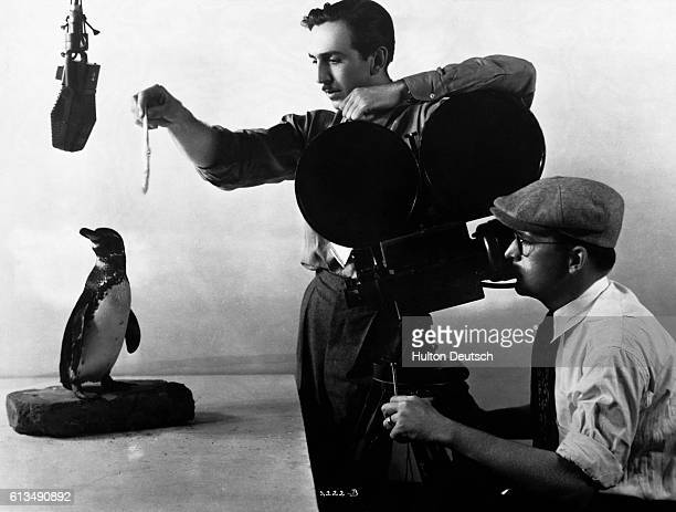 Film producer and cartoonist Walt Disney feeds a penguin as a cameraman records the bird's movement and behavoir ca 1930 This footage will then be...