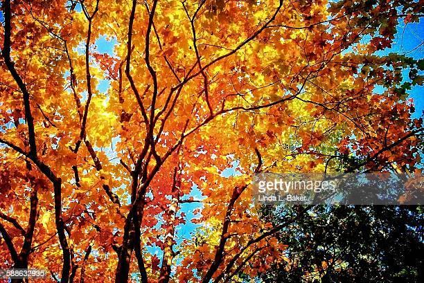 Finally Fall