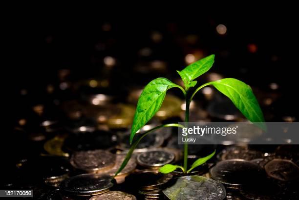 Financial growth money tree