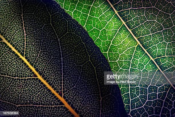 Fine art photography - leaves