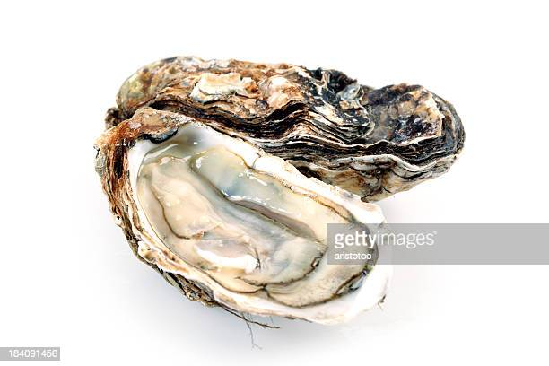 Fine de Claire Oysters Isolated on White