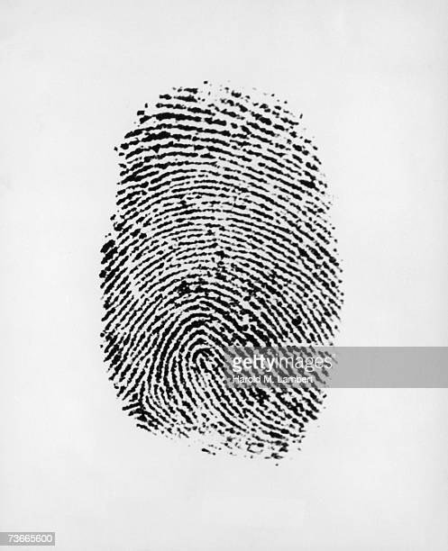 A fingerprint of the loop type circa 1955