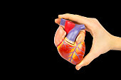 Male hand holding plastic human heart model isolated on black background. This artificial organ model is used for education in high school to learn students about biology. They learn about the human b