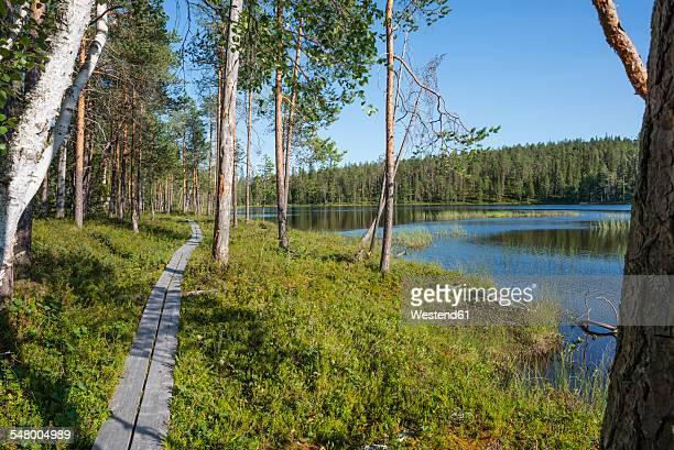 Finland, Lapland, Kuusamo, Oulanka National Park, pine forest with boardwalk and lake