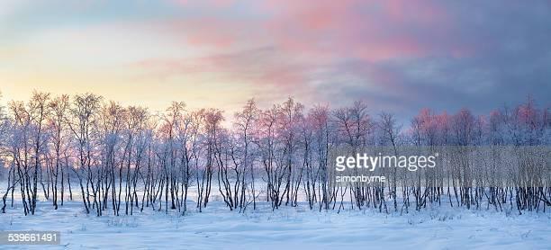 Finland, Lapland, Winter sunrise