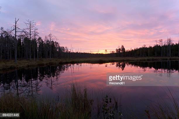 Finland, North Karelia, Kuhmo, lake in the Taiga at dawn