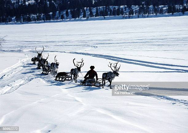 Finland, reindeer pulling sleds across snow