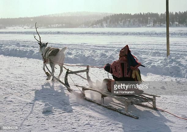 Finland, saamis being pulled on sleds by reindeer on path, rear view