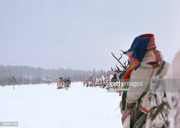 Finland, saamis with reindeer sleds in line, rear view