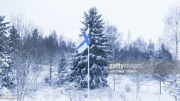Finnish Flag Against Pine Tree On Snowy Field