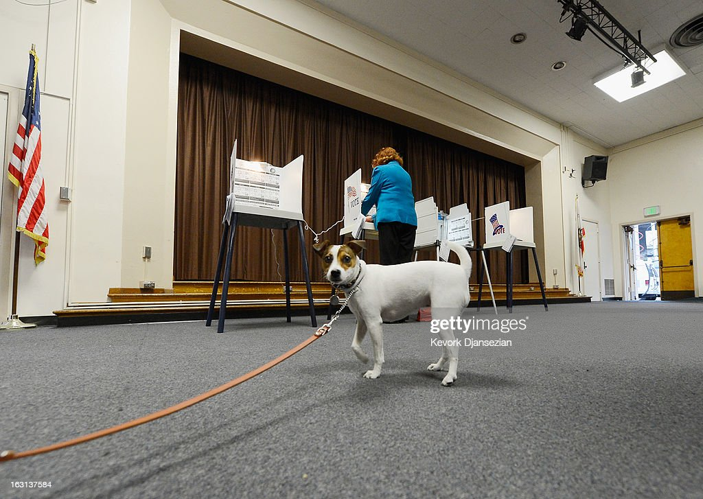 Fiona, a Jack Russell Terrier, waits for her owner Deborah Murphy (not pictured) to cast her ballot at Allesandro Elementary School on March 5, 2013 in the Silver Lake area of Los Angeles, California. Turnout is expected to be very low among the city's 1.8 million, making a run off at the end of May all but certain. Los Angeles City Councilman Eric Garcetti and Controller Wendy Greuel are locked in a close tie for the lead in the Los Angeles mayoral primary. The top two vote-getters will face each other in a run-off in late May.