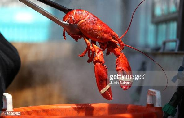 Fiona Warren of Three Sons Lobster and Fish removes a freshly cooked lobster from a pot on July 21 2012 in Portland Maine A mild winter and warmer...