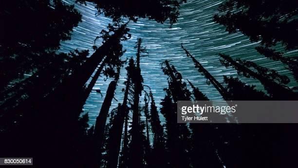 Fir Forest Night Sky Star Trails Over Oregon