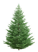 Christmas fir tree isolated over white 3d rendering